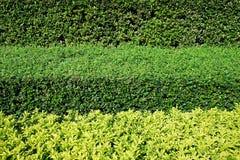Grüne Büsche Hintergrund mit drei im horizontalen Schichten Lizenzfreies Stockbild