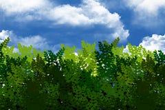Grüne Büsche im Himmel. Stockfotos