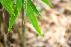 Grüne Bambusblätter Stockfoto