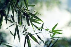 Grüne Bambusblätter mit Nebel stockfoto
