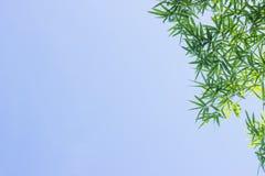 Grüne Bambusblätter oder -hintergrund Grüne Energie Lizenzfreie Stockfotografie