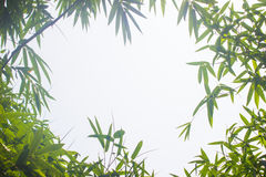 Grüne Bambusblätter oder mit Hintergrund Grüne Energie Lizenzfreie Stockbilder