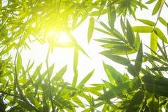 Grüne Bambusblätter oder mit Hintergrund Grüne Energie Stockfotos