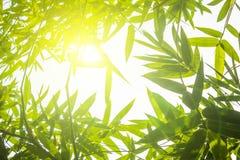 Grüne Bambusblätter oder mit Hintergrund Grüne Energie lokalisiertes SP Stockbilder