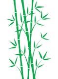 Grüne Bambusstämme Stockbilder