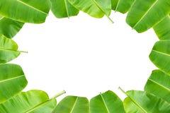 Grüne Banane verlässt Hintergrund Lizenzfreie Stockfotos
