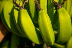 Grüne Bananen Stockfotografie