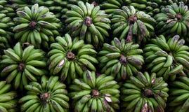 Grüne Bananen in Uganda Lizenzfreies Stockfoto