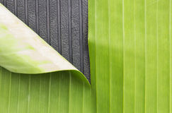 Grüne Bananenblatt- und -gummimarkierungshintergrundzusammenfassung Stockfotografie