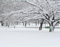 Grüne Bank im Winter Stockfotos