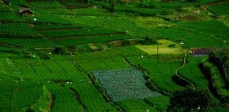 Grüne Bauernhöfe Lizenzfreie Stockbilder