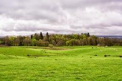 Grüne Bauernhoffelder unter einem bewölkten Himmel in Schottland, Vereinigtes Königreich Lizenzfreies Stockbild