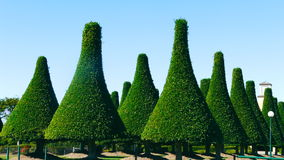 Grüne Baum-Oberseiten Lizenzfreie Stockfotos