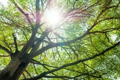 Grüne Baumaste mit Sonnenlicht Lizenzfreie Stockbilder