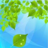 Grüne Baumblätter auf einem blauen Hintergrund Stockbilder