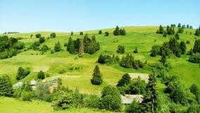 Grüne Baumgebirgsnaturlandschaft lizenzfreie stockfotos