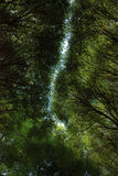 Grüne Baumkronen Lizenzfreie Stockbilder