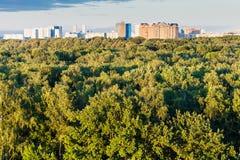 Grüne Baumkronen und -stadt auf Horizont im Sommer Stockfotos