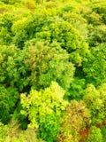 Grüne Baumkronen von der Vogelperspektive Lizenzfreie Stockfotos
