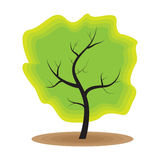 Grüne Baumnaturökologie Stockbilder