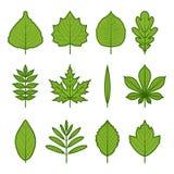 grüne Baumschößlinge stock abbildung