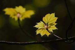 grüne Baumschößlinge Stockfoto