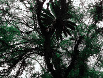 grüne Baumschößlinge Lizenzfreies Stockbild