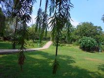 grüne Baumschößlinge Stockbild