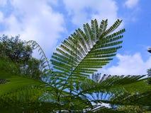 grüne Baumschößlinge Lizenzfreie Stockfotografie