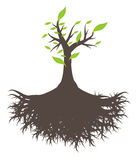 Grüne Baumwurzel Stock Abbildung