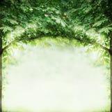 Grüne Baumzweige wölben sich, Sommernaturhintergrund Stockfoto