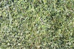 Grüne Beschaffenheit Stockbilder
