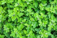 Grüne Beschaffenheit Lizenzfreies Stockfoto