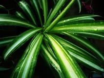 Grüne Beschaffenheit der Blumen stockbild