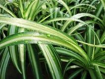 Grüne Beschaffenheit der Blumen lizenzfreie stockfotografie