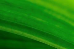 Grüne Beschaffenheit des Blattes Lizenzfreie Stockbilder