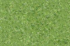 Grüne Beschaffenheit des Musters der geschnittenen Gurke Lizenzfreie Stockfotos