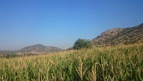 Grüne Beschaffenheit von der Türkei an einem klaren sonnigen Tag stockbild