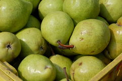 Grüne Birnen Lizenzfreies Stockbild