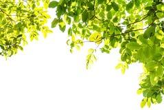 Grüne Blätter Stockbilder