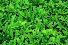 Grüne Blätter stockfotografie