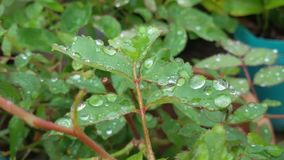 Grüne Blätter Lizenzfreie Stockfotos