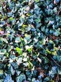 Grüne Blätter Lizenzfreies Stockfoto