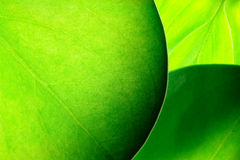 Grüne Blätter Stockfoto