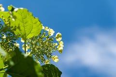 Gr?ne Bl?tter auf einem blauen Himmel mit Wolkenhintergrund lizenzfreie stockfotos