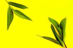 Grüne Blätter auf einem gelben Hintergrund, flache Lage, Spitze, Ansicht, schlagkräftiger Pastell, Duoton Stockbilder