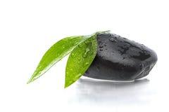 Grüne Blätter auf schwarzem Stein lizenzfreie stockbilder