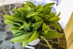 Grüne Blätter auf Tabelle stockbilder