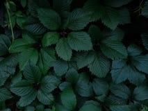 Grüne Blätter in den Tropfen nach Regen stockbilder