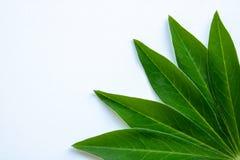 Grüne Blätter in der Ecke der weißen Hintergrundpostkarte stockfoto